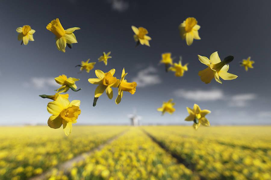 Цветы в невесомости: великолепная серия фотографий
