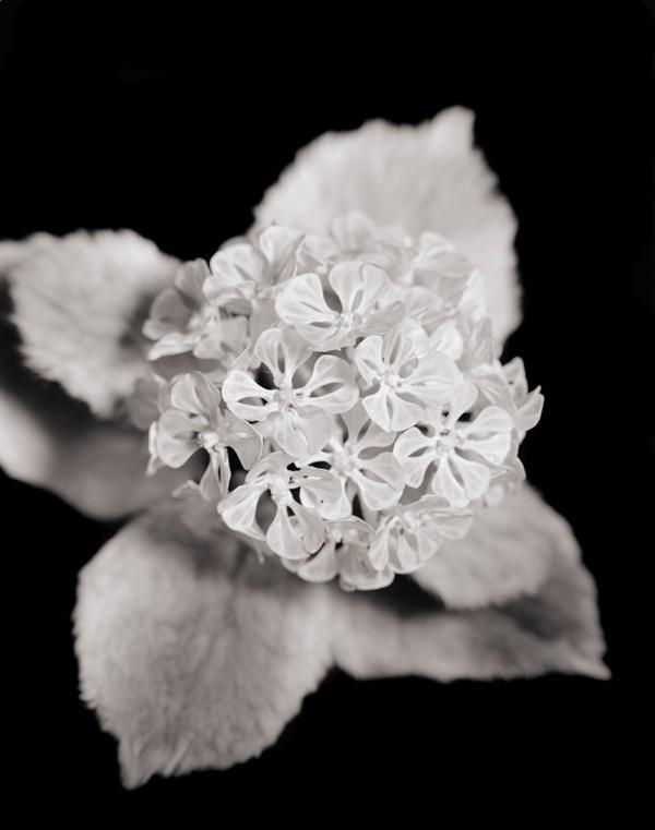 Цветы из необычных материалов от японского художника