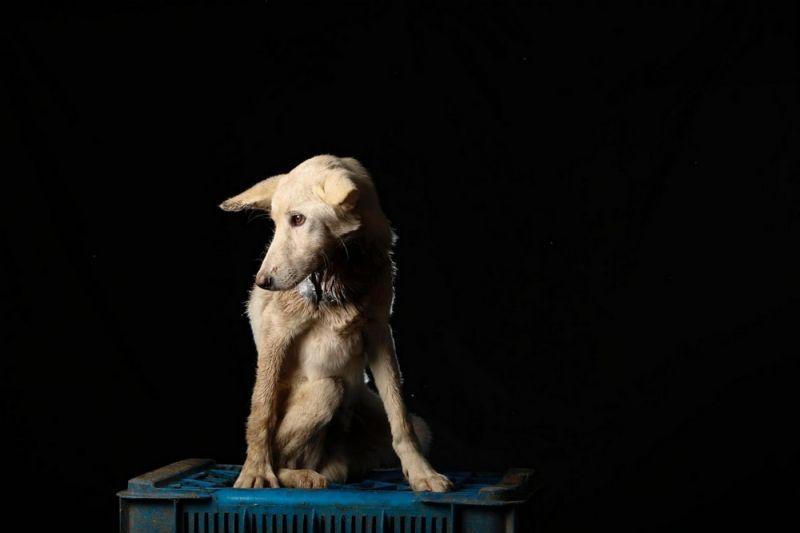 Собачья жизнь в Венесуэле