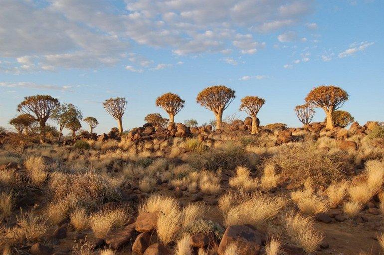 Уникальный Колчанный Лес в Намибии