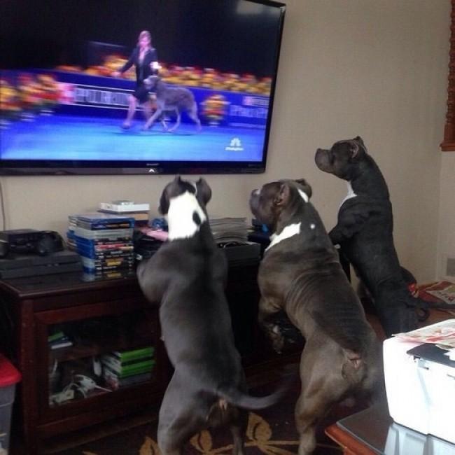 15 смешных собак, которые ведут себя как люди