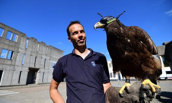 Полиция Нидерландов обучила орлов бороться с беспилотниками
