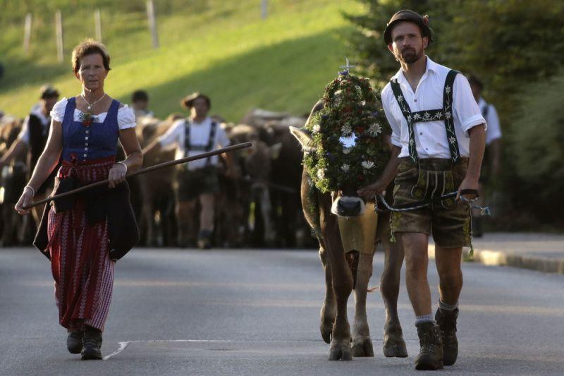 Праздник Almabtrieb в Германии