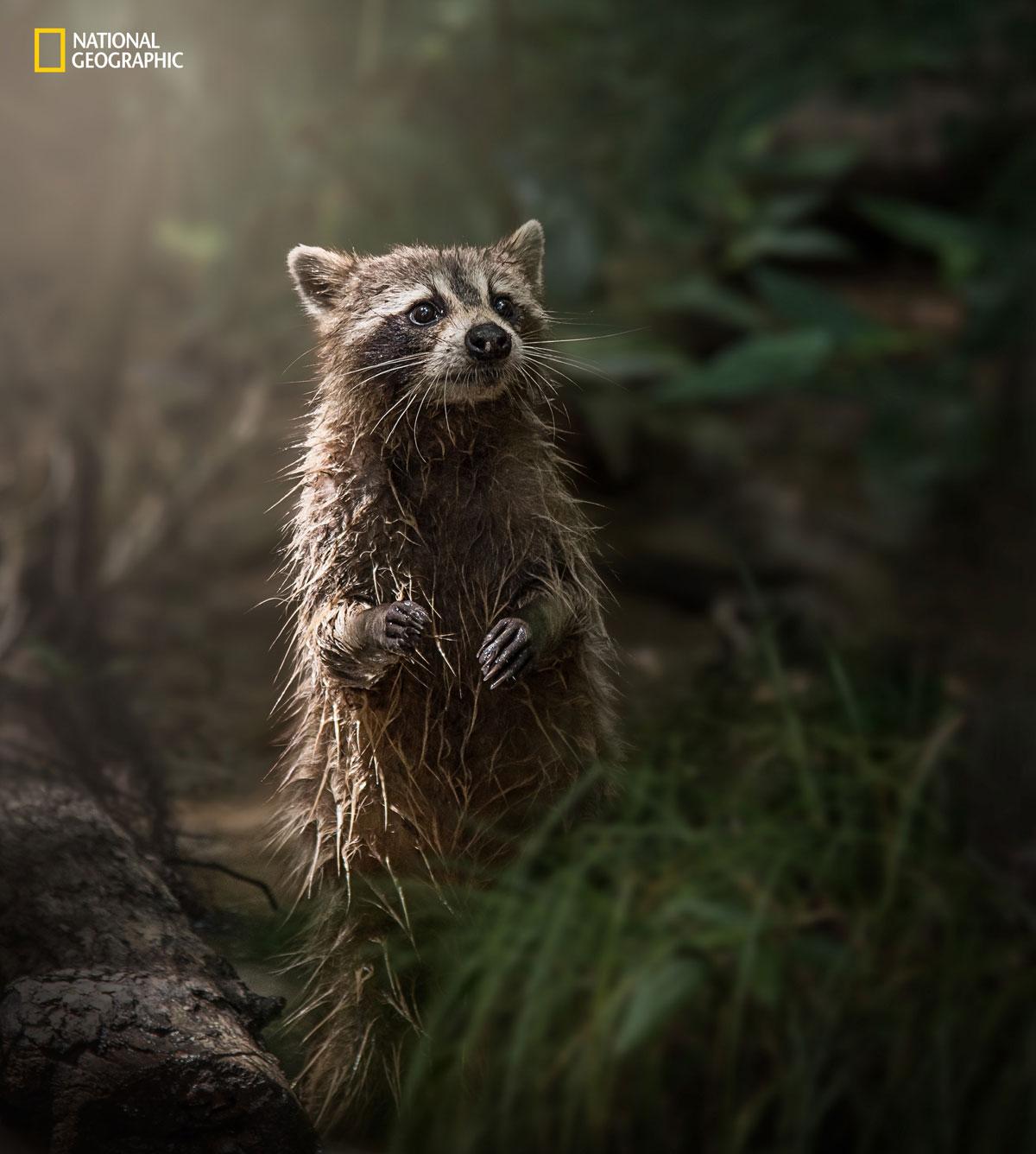 Интересные фотографии с конкурса National Geographic 2016