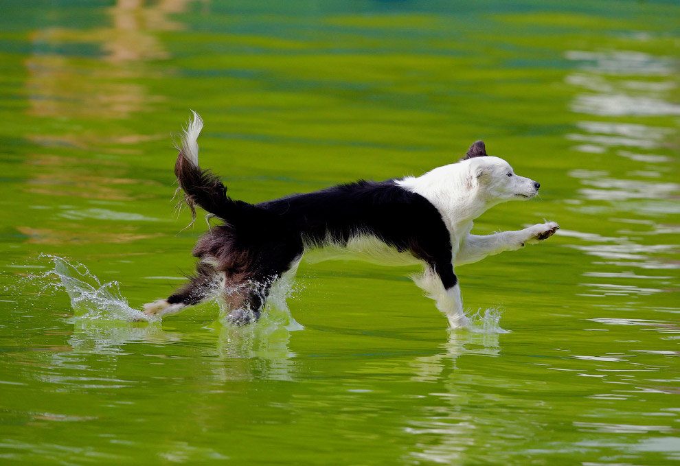 Конкурс летучих собак