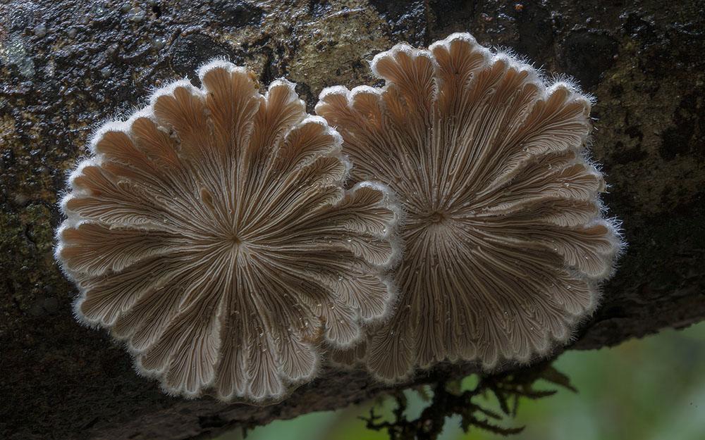 Необычные и странные грибы от австралийского фотографа Стива Эксфорда