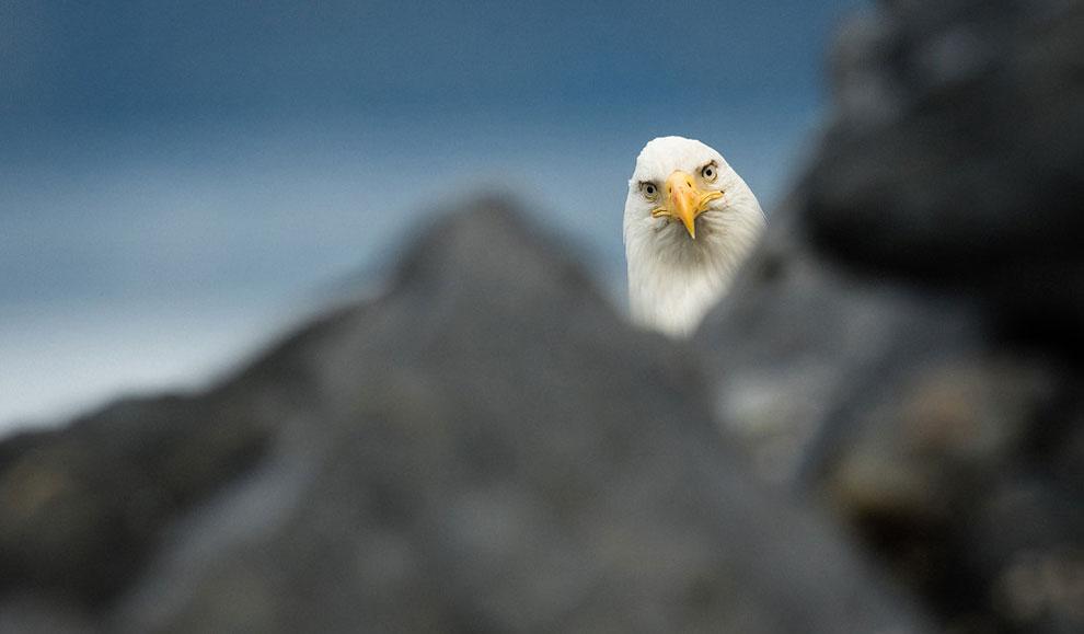 Победители конкурса самых смешных фотографий дикой природы