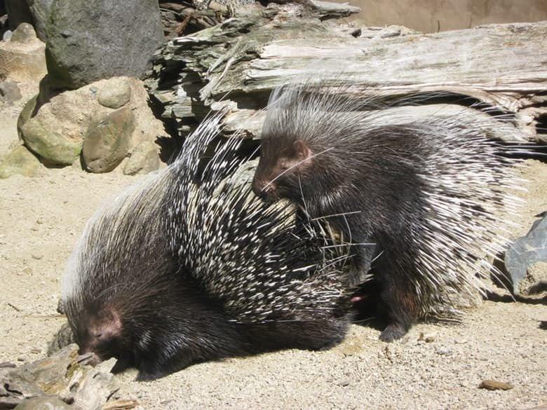 15 особенностей поведения различных животных во время спаривания