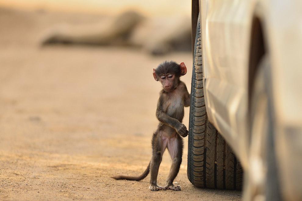 Конкурс фотографий животных от лондонского зоопарка 2016