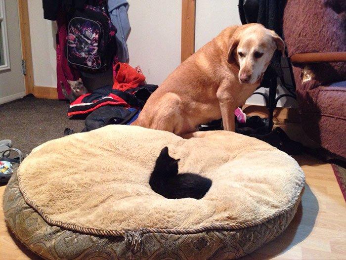 Кошки, которые захватили лежаки собак