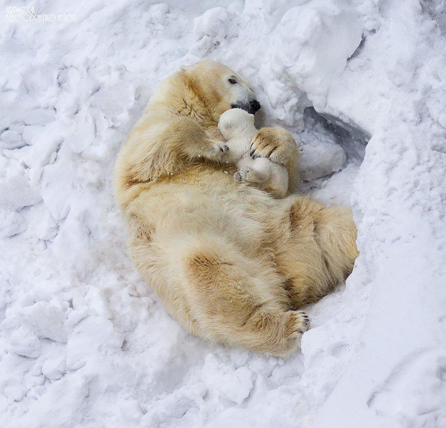 Очаровательные мамы-медведицы с медвежатами