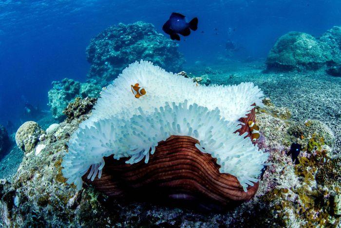 Из-за потепления воды на Окинаве обесцвечиваются и гибнут кораллы