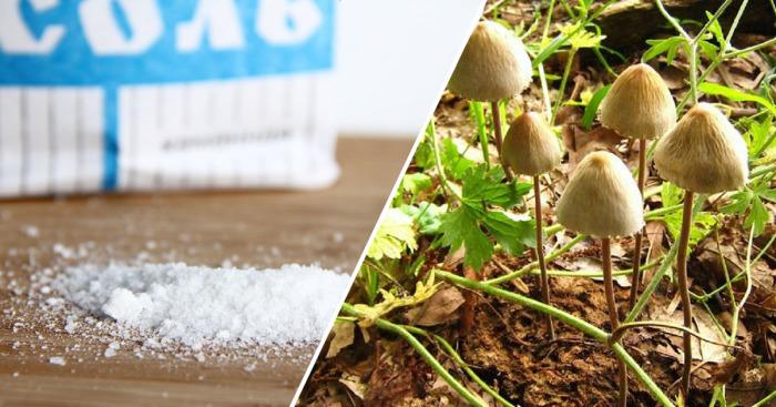 Натуральные продукты, которые могут быть вредны для человека