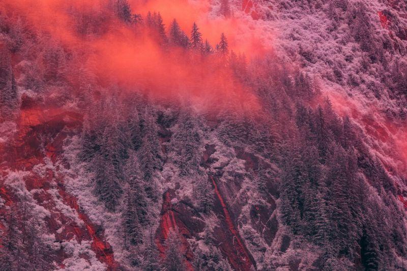 Инфракрасные фотографии природы от Брэдли Манковица