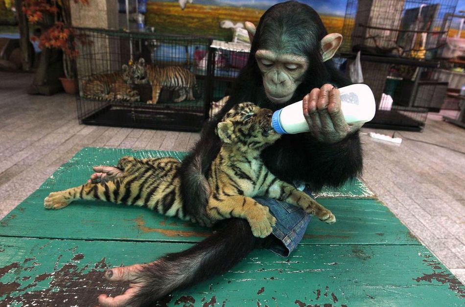 Чужих детей не бывает, даже у животных