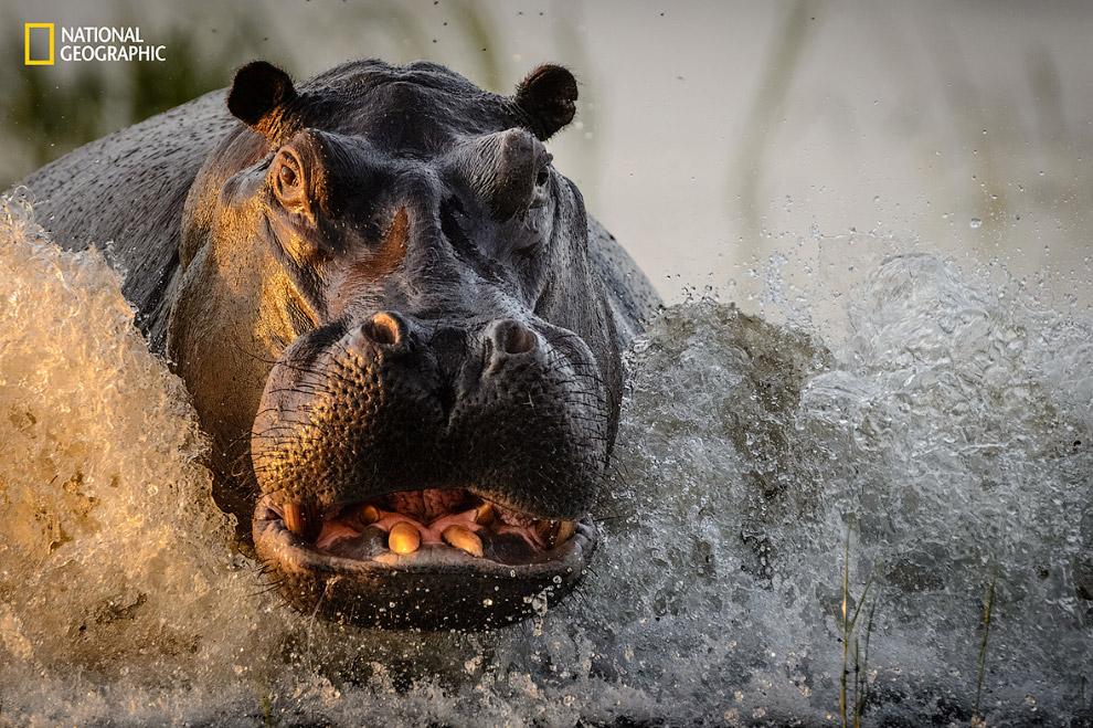 Лучший природный фотограф года 2016 от National Geographic