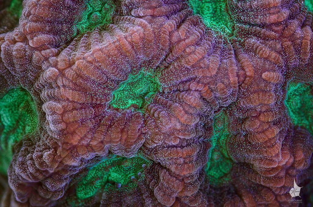 Яркие макрофотографии кораллов Большого Барьерного рифа