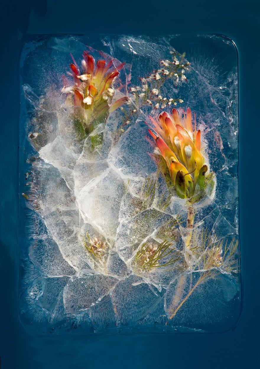 Замороженные натюрморты от Брюса Бойда