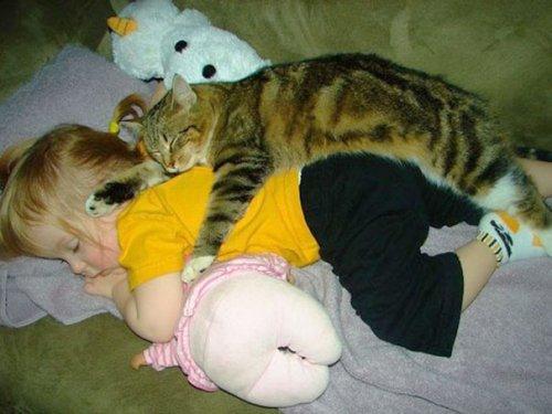 Коты и маленькие дети