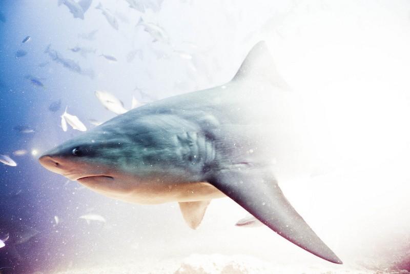 Удивительные снимки с акулами от голливудского фотографа