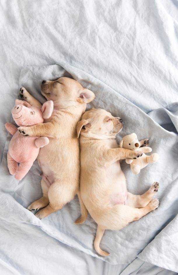 Милые щенки, которые вызовут улыбку