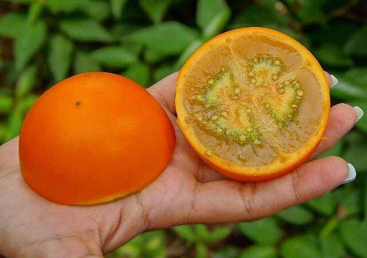 Экзотические фрукты, о которых вы еще не слышали