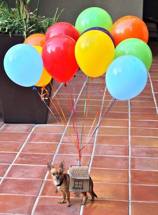 Наряды для собак на Хэллоуин