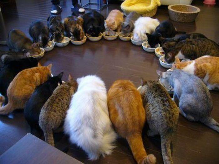 Удивительные синхронные коты
