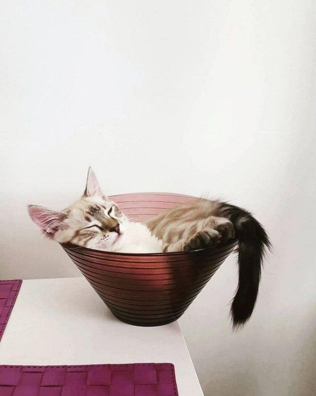 10 котов, которые спят в полном отрубе