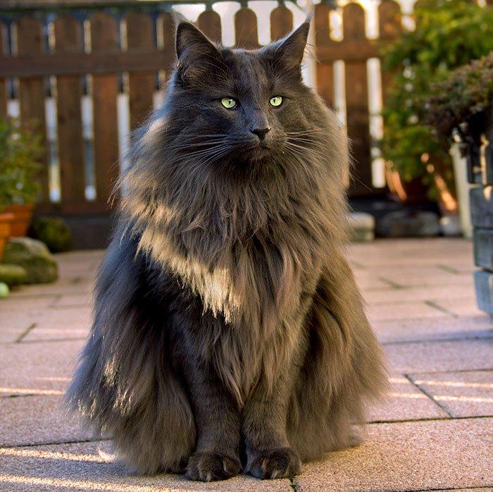 Подборка самых красивых кошек в мире