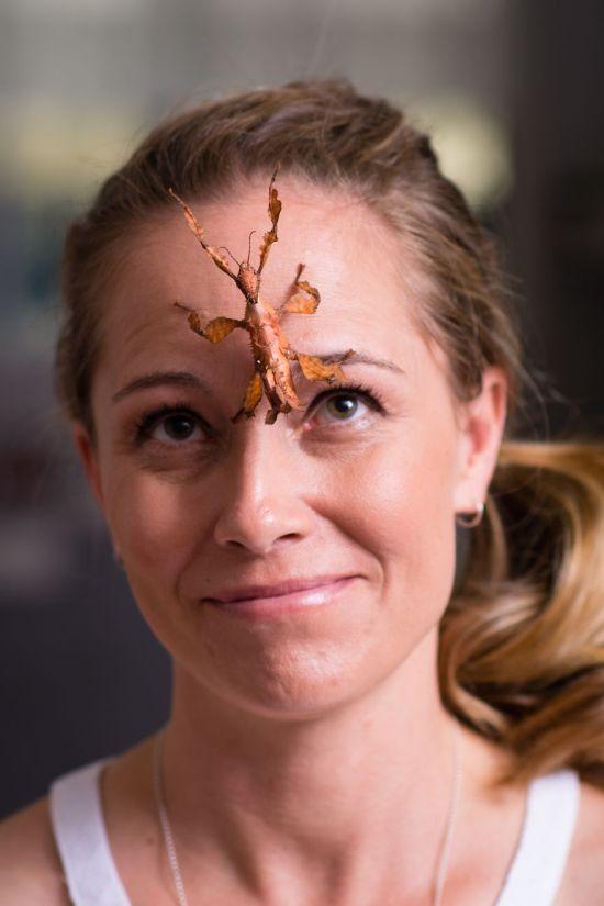 Энтомолог из Австралии считает ядовитых пауков лучшими домашними животными