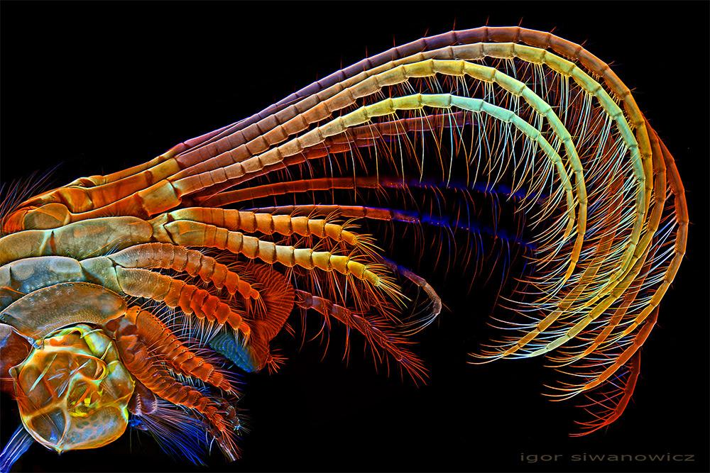 Микрофотографии от Игоря Сивановича