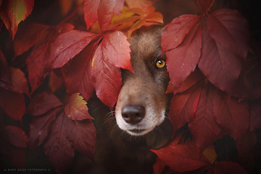 Осенние собаки от Энн Гайер