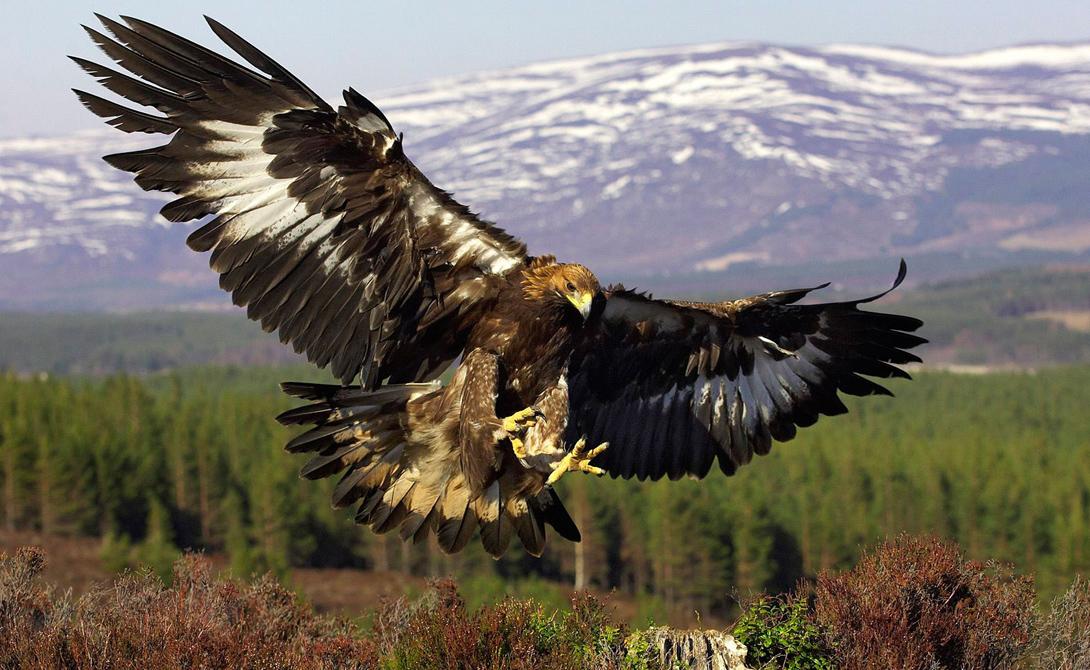 хищные птицы якутии фото когда аксессуаров