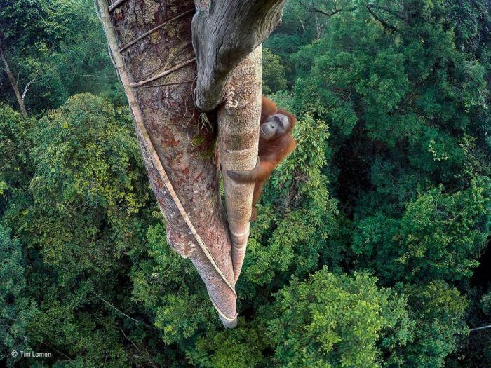 Лучшие работы конкурса дикой природы Wildlife Photographer of the Year