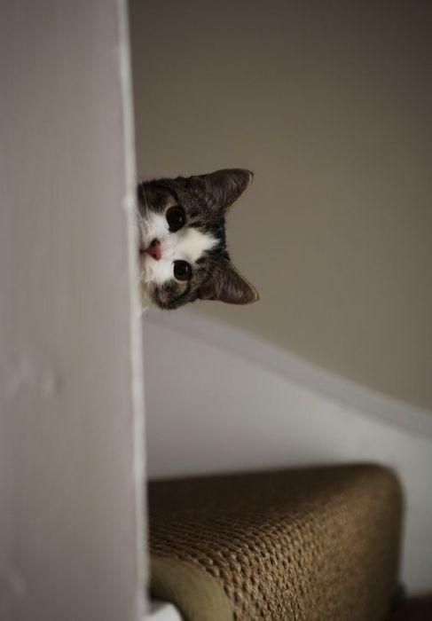 Любопытные коты, которым интересно, чем это вы там занимаетесь