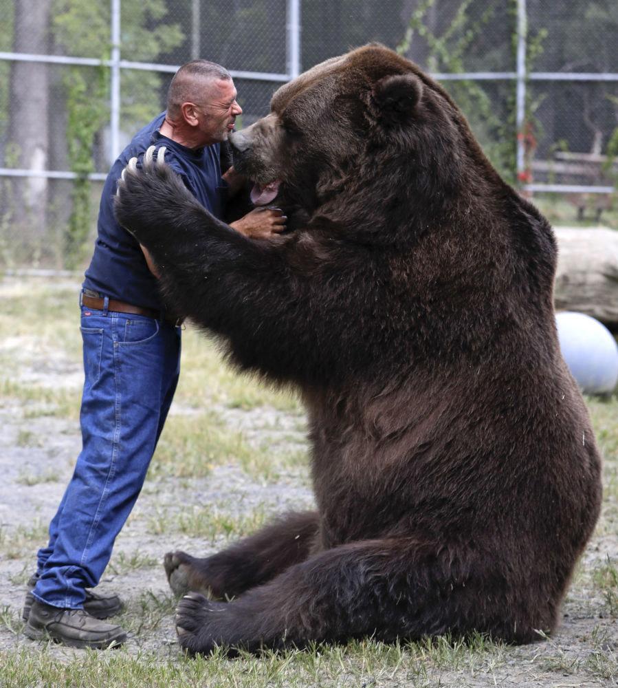 Многолетняя дружба мужика и гигантского медведя