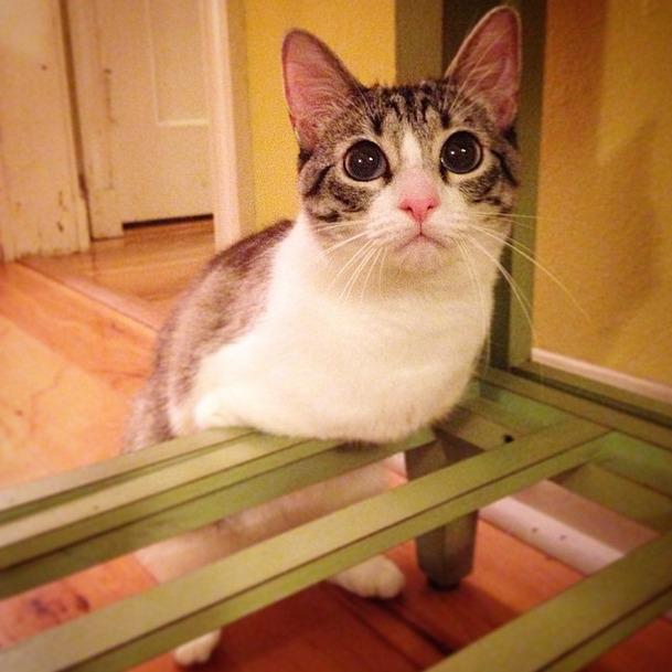 Храбрая кошка-инвалид — новая звезда Instagram