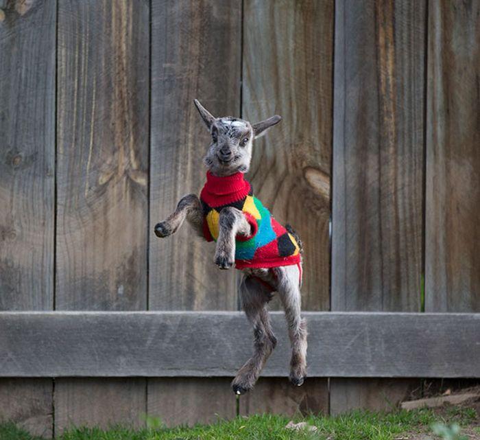 Милые животные в вязаных свитерах