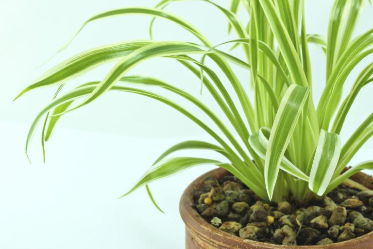 Неприхотливые домашние растения, которые очищают воздух