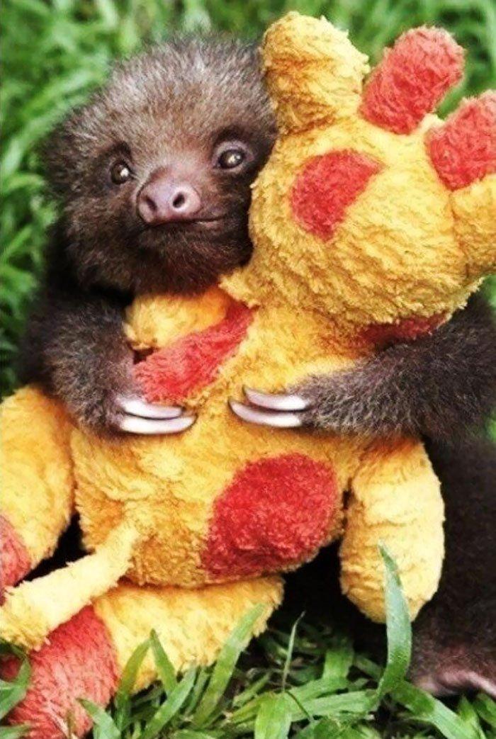 Спокойные и очаровательные ленивцы