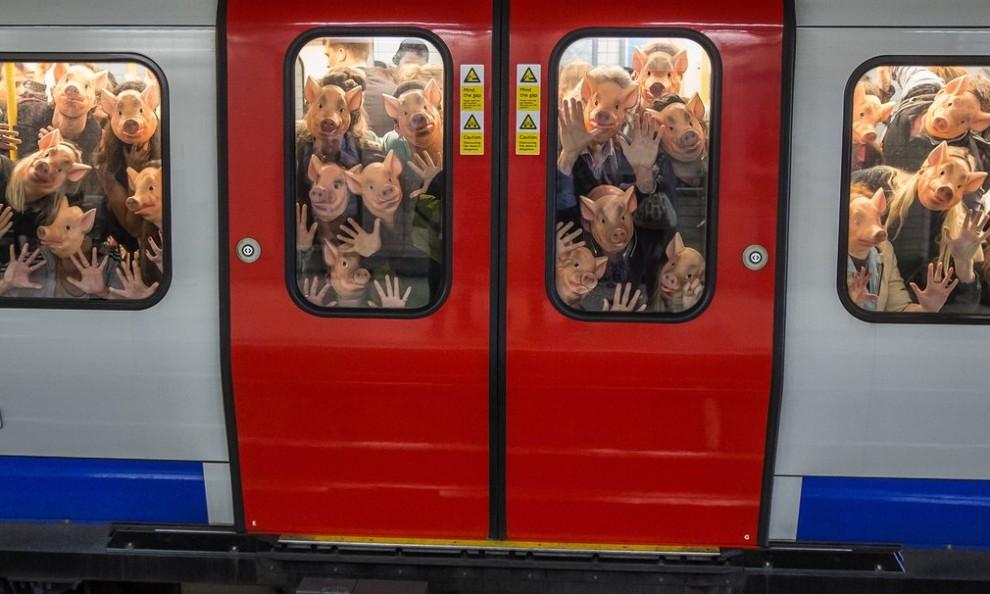 Выставка лучших работ британских фотокорреспондентов в Лондоне
