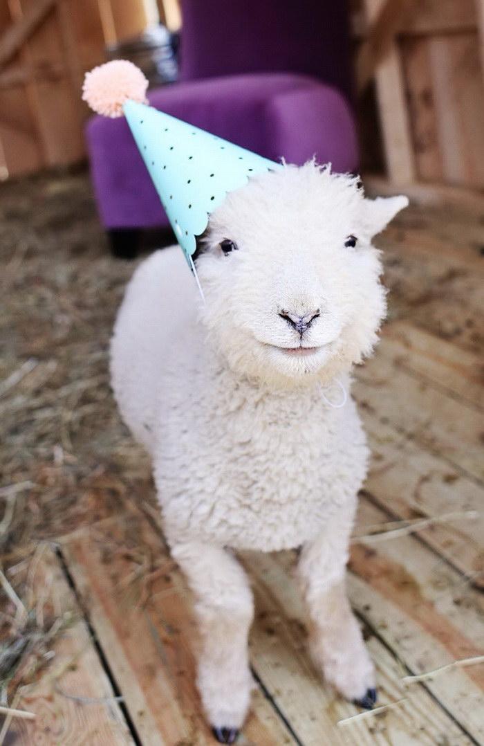 Животные и шляпы от Lindsey Bonnice