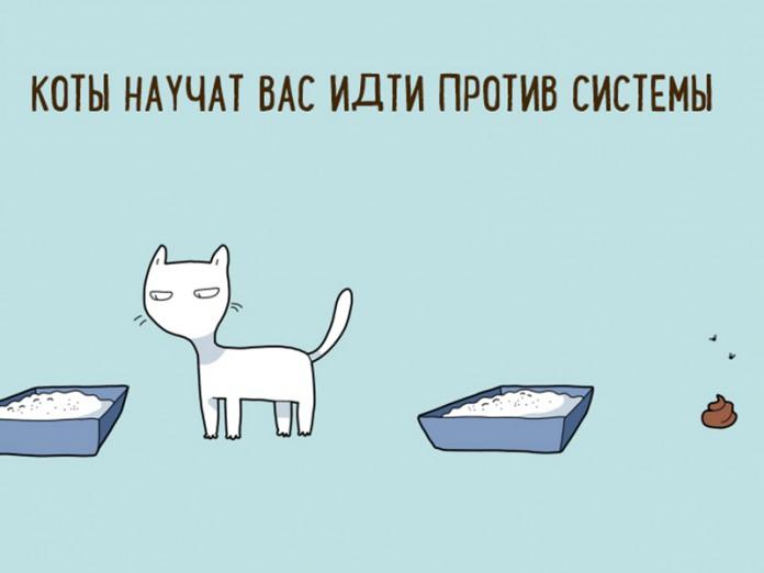 картинка завести кота стилисты нашей