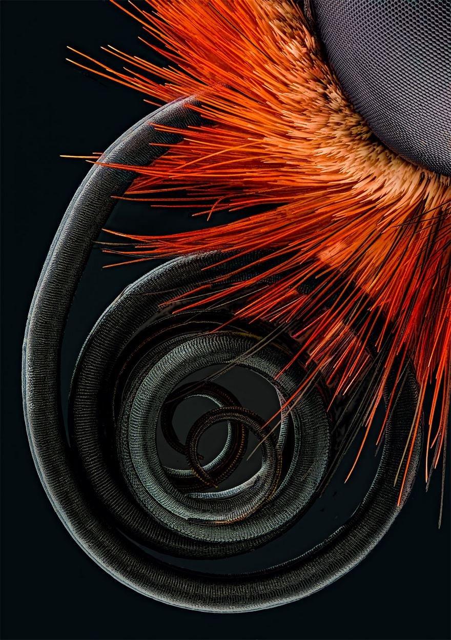 Победители конкурса микрофотогарфии Small World Photomicrography 2016