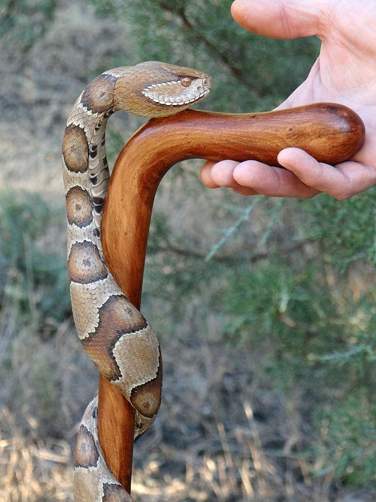 Трости в виде змей
