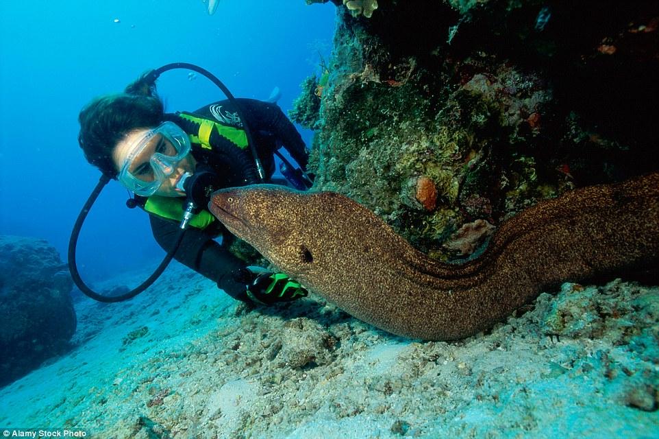 Ужасы из морских глубин: какие опасности таит в себе океан