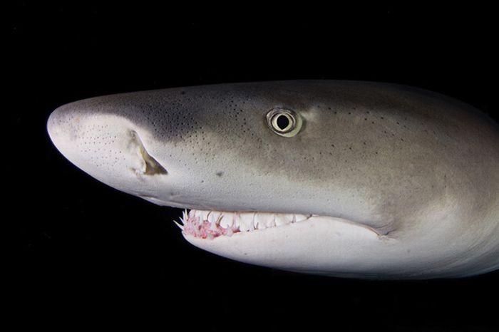 Жуткие акулы на фотографиях