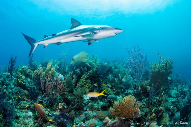 Архипелаг Сады Королевы в Карибском море