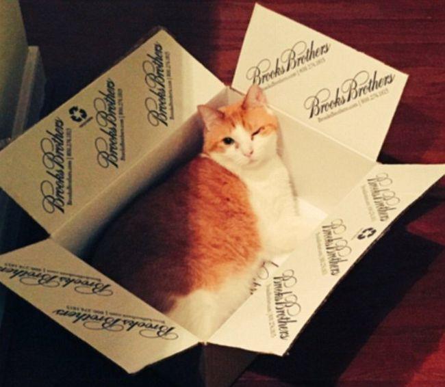 Кошки любят залезать в коробки